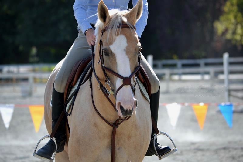 Indoor equestrian centre, training quality equestrian riders ...
